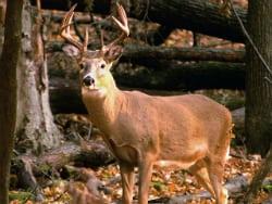 deer-hunting_70381