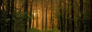 forest-store-trees-actual-1056379
