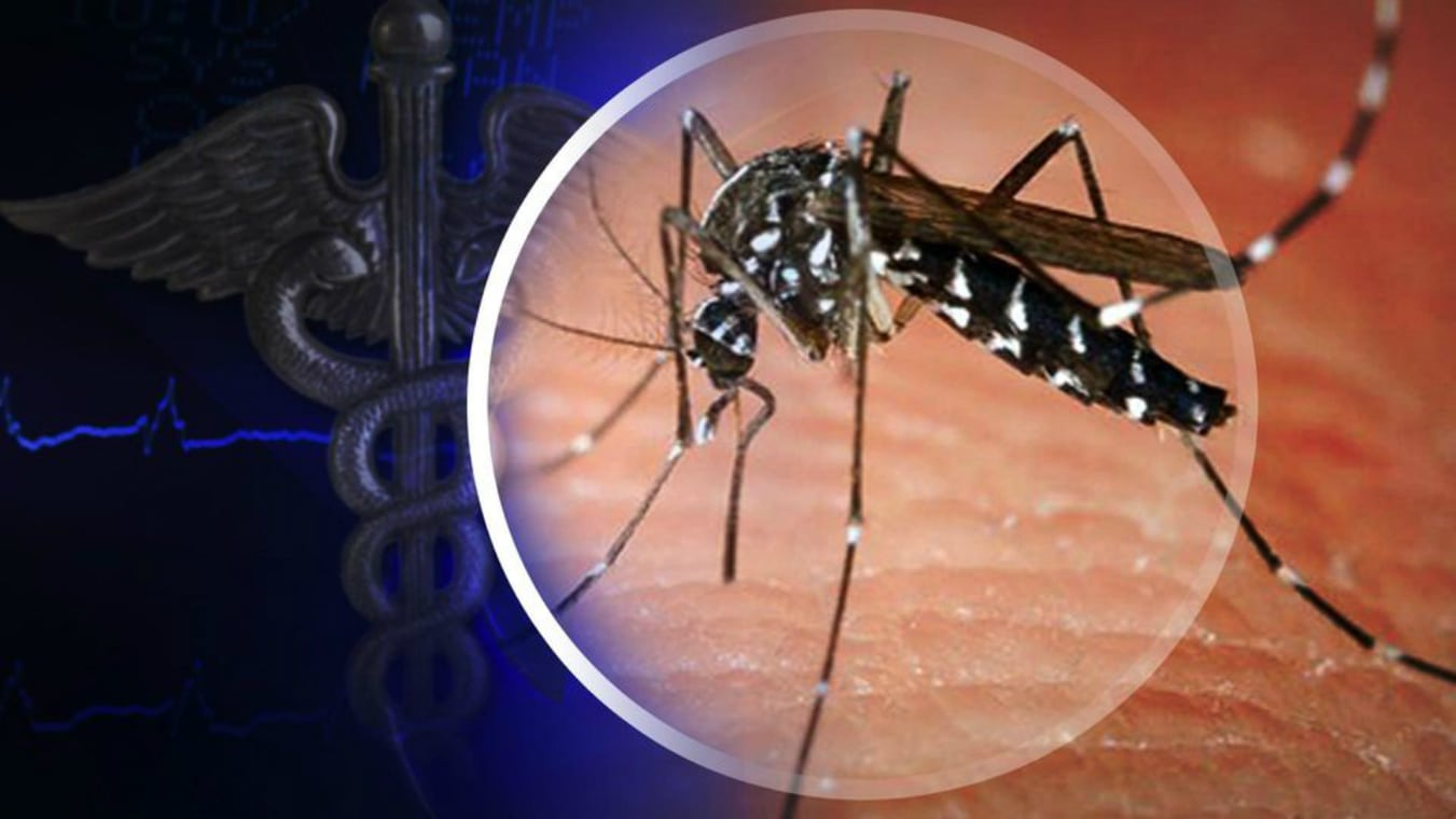 hd_ots_asian_tiger_mosquito_ab_WPXI_2403
