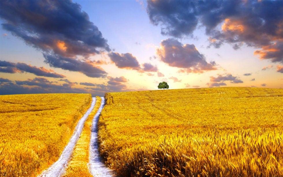 wheat-harvest_1280x800