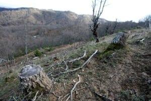 Greece deforestation