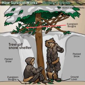 Pine tree snow shelter