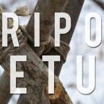 how to make a tripod